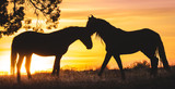 Fototapeta Horses - Wild horse sunset