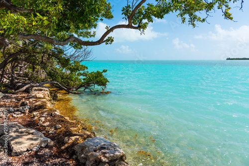 Foto auf AluDibond Turkis Turquoise water in Florida Keys shore