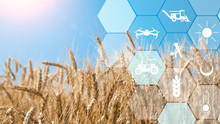 Precision Agriculture Network Icons On Wheat Field Background
