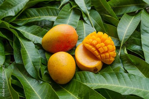 Ripe yellow mango fruit on green leaf background Fototapeta