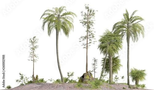 Fotografie, Obraz  Trees of the mesozoic era isolated on white background 3D illustration