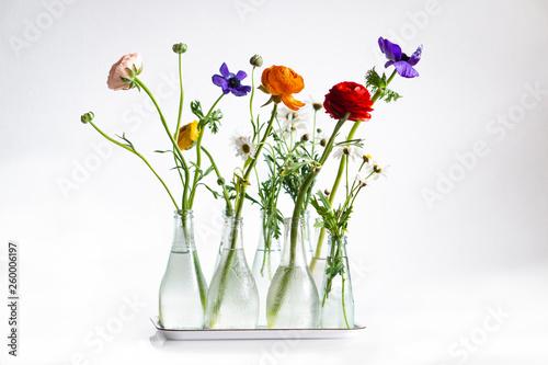 Leinwand Poster Frühlingsblumen