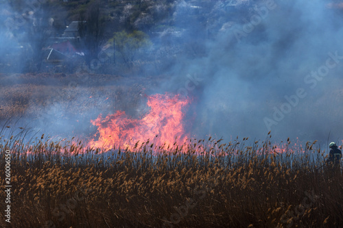 Printed kitchen splashbacks Brown Raging forest spring fires. Burning dry grass, reed along lake. Grass is burning in meadow. Ecological catastrophy. Fire and smoke destroy all life. Firefighters extinguish Big fire. Lot of smoke