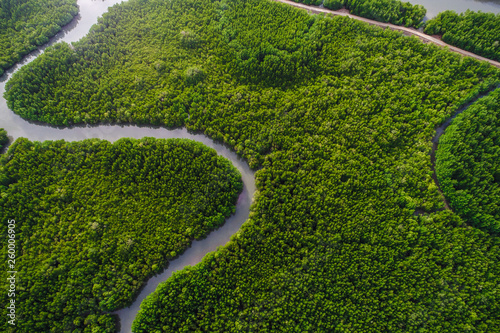 Valokuva  Aerial view green mangrove tropical forest swamp line to sea