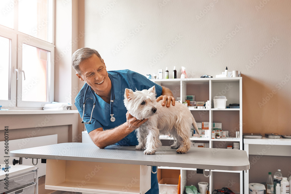 Fototapety, obrazy: My cute patient. Cheerful middle aged vet looking with smile at small dog standing on the table at veterinary clinic