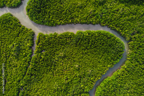 Poster Rivière de la forêt Aerial view green mangrove tropical forest swamp line to sea
