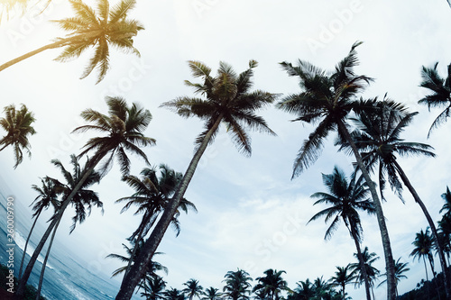 Photo sur Toile Palmier View of coconut trees at seaside under blue sky,Sri lanka