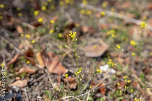 Photo 봄 들꽃 접사사진