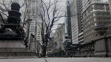 New York Pigeons In Empty  Par...