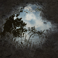 Sky, Cloud, Twigs And Leaves Reflected Dramatically In Small Puddle Of Water Providing A Startling Abstract Image
