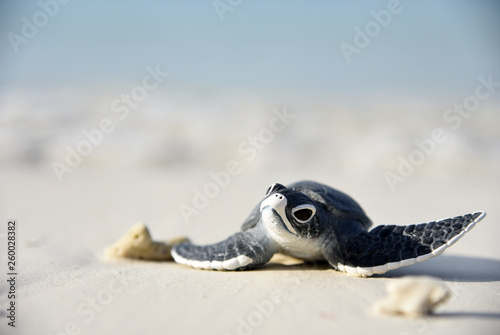 Tuinposter Schildpad Little turtle on a white beach
