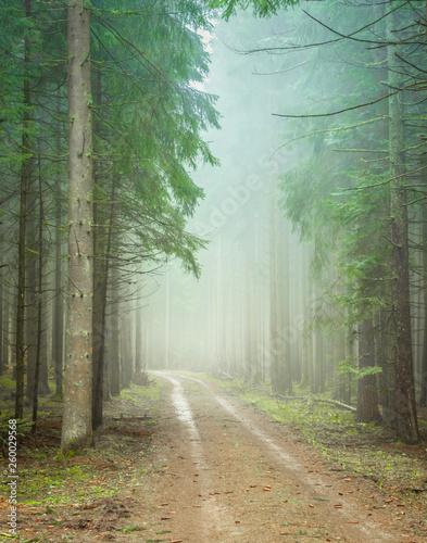 nebliger Waldweg #260029568