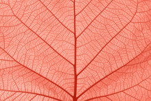 Coral Pink Toned Close Up Texture Of Leaf Veins