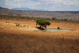 Fototapeta Sawanna - Waterhole Tsavo West Kenya