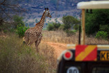 Fototapeta Sawanna - Giraffe Tsavo West Kenya