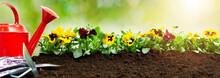 Gardening Tools On Soil Backgr...