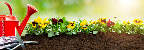 Papiers peints Pansies Gardening tools on soil background. Planting spring pansy flower in garden. Spring garden work concept