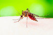 canvas print picture Encephalitis, Yellow Fever, Malaria Disease or Zika Virus Infected Culex Mosquito Parasite Insect Macro on Green Background