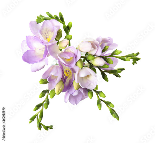 Photo sur Toile Lilac Bouquet of fresh freesia flowers isolated on white, top view