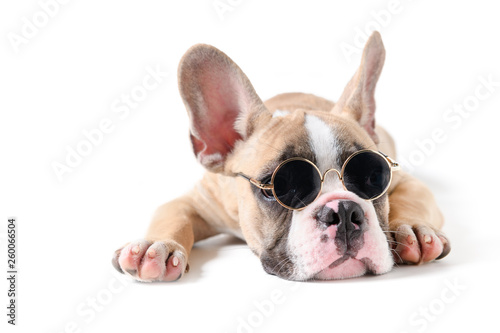 Foto  Cute french bulldog wear sunglass and sleeping