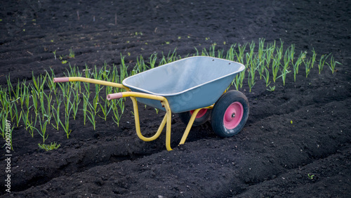Fotografía  Empty metal gray wheelbarrow on the beds in the garden on a spring day