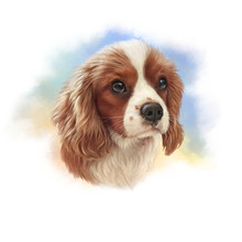 Illustration Of Cavalier King ...