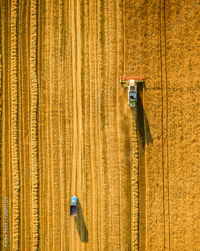 Harvester working in field and mows wheat. Ukraine. Aerial view. Wallpaper Mural