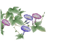 Watercolor With A Flowering Br...