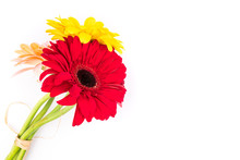 Colored Gerbera Flowers
