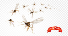 Insect Mosquito, Gnat And Pest...