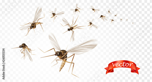 Canvas Insect mosquito, gnat and pest illustration for repellent oil, spray and patches ads, poster