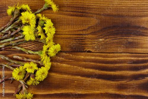 Obraz na plátne Coltsfoot (Tussilago farfara) flowers on wooden background