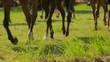 Brown Horses Walking Around In Circle
