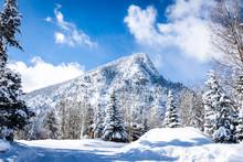 Mt Royal In Winter