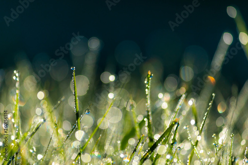 Green Grass with Dew Drops Macro Nature Background - 260156514