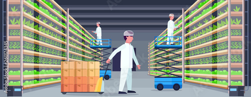 Obraz agriculture engineers working in modern organic vertical farm interior farming system concept pallet truck scissors lift platforms equipment green plants growing industry horizontal flat - fototapety do salonu
