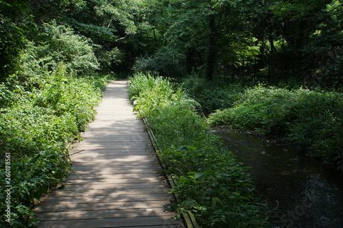 Foto op Canvas Weg in bos 遊歩道