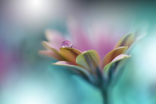 Beautiful Macro Shot Of Magic Flowers.Border Art Design.Magic Light.Extreme Close Up Macro Photography.Beautiful Nature Background.Amazing Spring Flowers.Water Drop.Creative Wallpaper.Green Color.