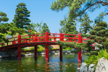 Japanese Style Garden Landscape With Red Wooden Bridge And Golden Carps