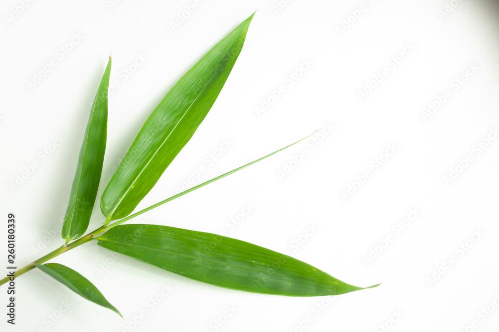bamboo leaf isolated white background