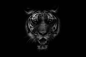 Crno-bijeli Prekrasan tigar na crnoj pozadini