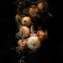 Bunch Of Hanging Fresh Onions ...