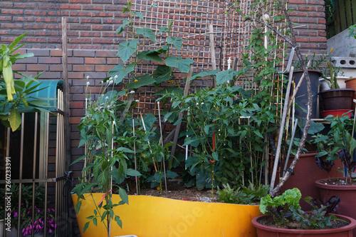Fotografie, Obraz  골목길에 있는 식물