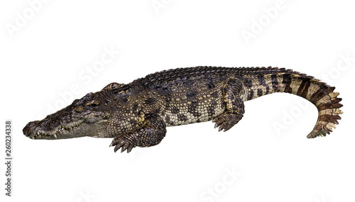 Side view of crocodile isolated on white Wallpaper Mural
