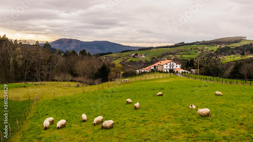 Foto op Aluminium Schapen Farm house of the Basque Country with a flock of sheep on a cloudy day