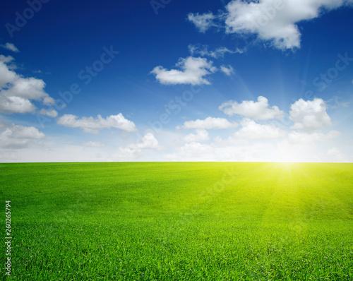 Spoed Fotobehang Weide, Moeras Green meadow and sun.