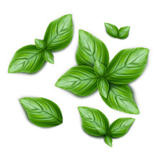 Set Of Green Basil Leaves. 3d ...