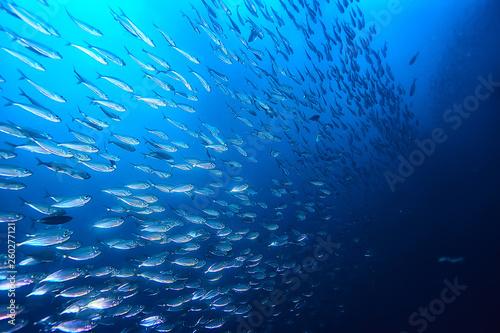 Foto auf Gartenposter Nordlicht lot of small fish in the sea under water / fish colony, fishing, ocean wildlife scene