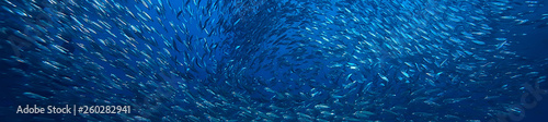 Foto scad jamb under water / sea ecosystem, large school of fish on a blue background