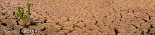 Valokuva Cactus growing racked and dry soil in arid areas landscape panorama